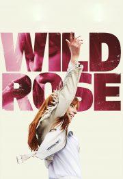 رز وحشی – Wild Rose 2018