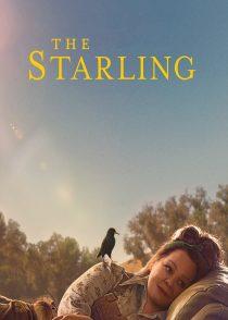 سار – The Starling 2021